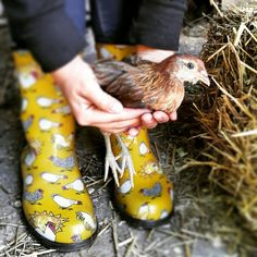 Sweet photo... Sloggers yellow chicken boots.