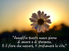 Buona Domenica by Metamorphosya - La filosofia del cambiamento  #Metamorphosya #buongiorno #amore #GiorgioStella #speranza #fiore #vita