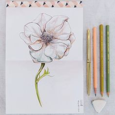 I hate flowers - I paint them because they're cheaper than models and they don't move. Georgia O'Keeffe Maybe thats the secret to her success. Note to self must start hating flowers. More sketches in preparation of #threaduary Coming this week. Taking some time to just draw is a luxury I dont often allow myself but January is always the best time for it. Watching all these sketchbook adventures come to life is going to be fun for me. #nature #anenome #art #artistsoninstagram #sketchbook…