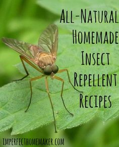 Homemade Insect Repellent Recipes