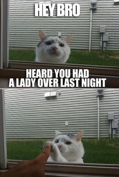 Funny Pictures Of The Day - 54 Pics   Check out awesome Cat Tees at http://presentpuppy.com/cats/