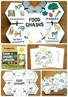 Great opportunity  for your students to learn about food chains in an engaging and fun way. Students will also understand that the Sun is the primary source of energy needed for all organisms to grow.This resource may be used with students from grades 4-6. Great with whole group, small groups or individual instruction and will fit perfectly in an ISN. This resource is adapted to address different learning styles.