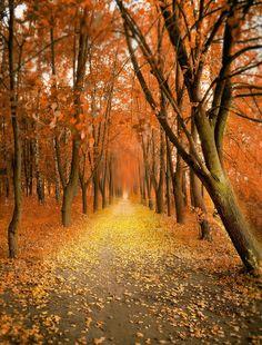 Ottobre è un mese splendido per scattare fotografie di panorami. I colori si accendono e i paesaggi diventano vari e spettacolari. Ecco una selezione delle più belle foto scattate in Ottobre. Autumn road by Inna Petrova Blue Pond & Firs ...