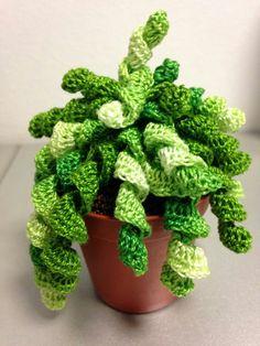 Cactus - idea only Crochet Flower Tutorial, Crochet Flower Patterns, Crochet Flowers, Crochet Cactus, Crochet Food, Knit Crochet, Cactus Craft, Baby Boy Knitting Patterns, Cactus Plante