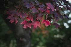 Colorful leaves   Donna Hopkins