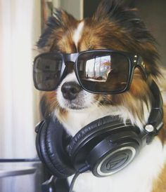 Fan Photo Friday: This has to be the furriest DJ we've ever seen! Shout out to @AdventuresofHugoandJake on Instagram: