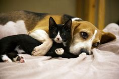 Beagle Love | Flickr - Photo Sharing!
