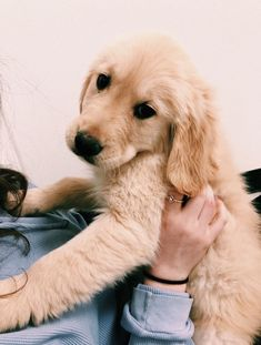 40 Ideas Dogs And Puppies Breeds Golden Retrievers Smile For 2019 - 40 Ideas Do. - 40 Ideas Dogs And Puppies Breeds Golden Retrievers Smile For 2019 – 40 Ideas Dogs And Puppies Br - Cute Puppies, Cute Dogs, Dogs And Puppies, Doggies, Cute Baby Animals, Animals And Pets, Funny Animals, Beautiful Dogs, Animals Beautiful