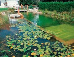Álomszép kerti fürdőtavak, amelyeknek azonnal helyet keresel a kertben – morzsaFARM