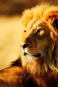 New Wonderful Photos: The King