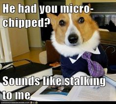 advice animals memes  - Animal Memes: Lawyer Dog: We Can Get a Restraining Order