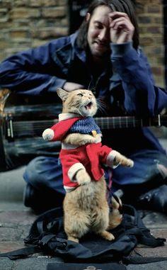 Street cat Bob singing