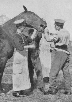 A #horse dentist of the British Army takes care of a patient in France, #1916. Animals, and especially horses, played a key part in the war effort of both sides during #WW1.