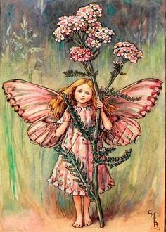 """Vintage print 'The Yarrow Fairy' by Cicely Mary Barker from """"The Book of the Flower Fairies""""; Poem and Pictures by Cicely Mary Barker, Published by Blackie & Son Limited, London [Flower Fairies - Summer] Cicely Mary Barker, Gravure Illustration, Fantasy Illustration, Fantasy Magic, Fantasy Art, Fairy Pictures, Vintage Fairies, Beautiful Fairies, Flower Fairies"""