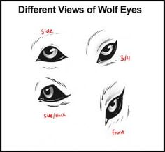 how to draw wolves step 5