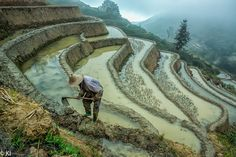 By Any Weather - Yuan Yuang rice terraces, Yunnan province, China. A man repairing rice field