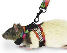 SuperPet Comfort Harness/Leash