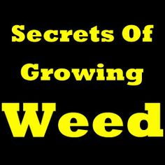 Secrets Of Growing Weed! Learn How to Grow Weed Indoors, How to Grow Cannabis And How To Grow Marijuana (Same Thing). Find Out The Easiest Way For Growing Marijuana And Growing Cannabis! by Anthony M. Santiago. $3.28. 3 pages