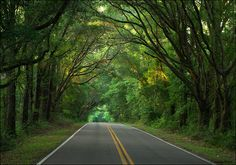 Love the canopy roads of my hometown Tallahassee & canopy roads | Tallahassee | Pinterest | Canopy