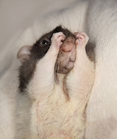 RATS HAVE FEELINGS TOO • IF YOU MAKE THAT FACE IT WILL STAY THAT WAY! ;)