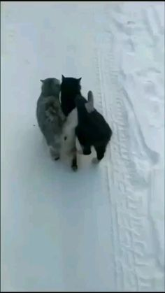 Funny Cute Cats, Cute Baby Cats, Cute Little Animals, Cute Funny Animals, Kittens Cutest, Cats And Kittens, Cute Animal Videos, Funny Animal Pictures, Beautiful Cats