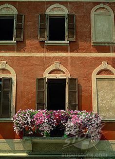 Close_up of petunias on a balcony of a house in Morcote, on Lake Lugano, Ticino, Switzerland, Europe (1890-7415 / 149-3559 © Robert Harding Picture Library)