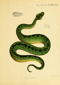 Pisces, batrachia, and reptilia / by G. A. Boulenger. on...