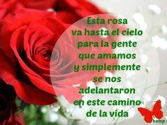 Esta rosa va hasta el cielo para la gente que amamos y simplemente, se nos adelantaron en este camino de la vida.