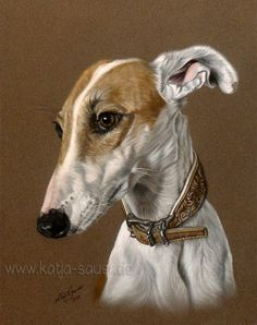 "Hundezeichnungen und Hundeportraits in Pastellkreide - Galgo ""Tari"" - Tierzeichnungen und Tierportraits von Katja Sauer / Dog paintings and dog portraits in soft pastels - Animal painting and animal portraits by Katja Sauer"