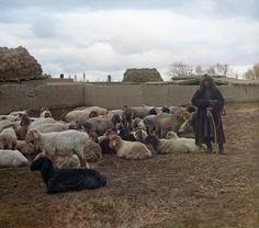 Sergei Prokudin-Gorskii Shepherd with Sheep