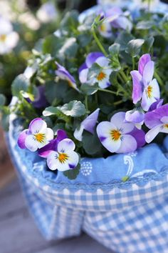 Pansies ✿⊱╮or possibly violas.  I don't know why they seem to be in some sort of tote bag, but I like the colour combination.
