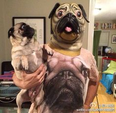 Look on the pug's face.... Priceless!!!