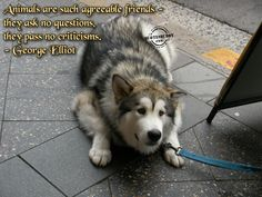 Google Image Result for http://www.quotesbuddy.com/uploads/2009/06/animal-quotes-graphics-8.jpg