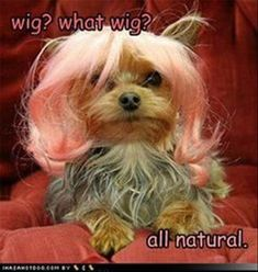 Wig? it is all natural, funny