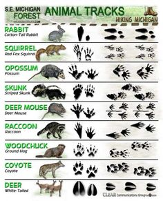 Have you ever found a track & wondered what animal it was? This chart identifies many in our area | Animal Track Identification |