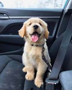 """√ 7 Cutest Dog Breeds in the World Dogs are the most favorite pets in the world. There are so many people are asume that dogs are part of their family. Here are Cutest Dog Breeds in the World.""""},""""attribution"""":null,""""debug_info_html"""":null,""""description"""":"""" Cute Dogs Breeds, Best Dog Breeds, Cute Dogs And Puppies, Best Dogs, Bird Breeds, Cutest Puppy Breeds, Puppies Tips, Small Puppies, Small Dogs"""