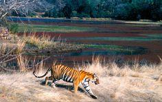 Good news: One year of ZERO poaching in Nepal   WWF