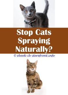 8 Unique Tips Can Change Your Life: Do Male Cats Spray If They Are Fixed how can i stop a cat from spraying.Where Does Cat Spray Come From apple cider vinegar flea spray for cats.Why Does A Cat Spray When Neutered.