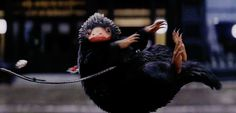 """The Niffler """"A mischievous, yet adorable creature that looks like a cross between a mole and a duck-billed platypus who like to steal shiny things. These animals have a magical pouch that allows them. Newt Scamander Aesthetic, Gifs, Harry Potter Ships, Fantastic Beasts And Where, Aesthetic Gif, Magical Creatures, Cultura Pop, Hogwarts, Hamsters"""