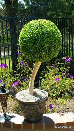 Artificial Garden Plants, Artificial Plant Wall, Artificial Boxwood, Artificial Flowers, Small Indoor Plants, Water Plants, Small Plants, Cool Ideas, Fake Plants Decor