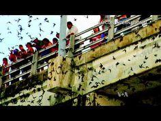 Bat Colony: Unusual Tourist Attraction in Texas