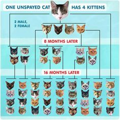 Please spay/neuter your cats.