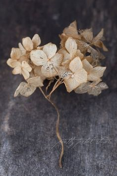 Fine Art Photograph Hydrangea Flowers Winter by PrettyPetalStudio
