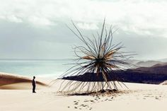 """""""Spinifex"""". Site-specific installation in southeastern Victoria's Croajingolong National Park — a UNESCO Biosphere Reserve — By Melbourne-based artist Corey Thomas"""