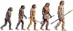 Los homínidos se caracterizan por su adaptación a la postura y marcha erectas, acortamiento de las extremidades superiores y evolución de la mano hacia una mayor funcionalidad; la regular proporción en las dimensiones de sus dientes, yuxtapuestos sin diastemas, describiendo un arco parabólico corto. Sus cuerpos eran robustos y tenían los brazos bien desarrollados. La inmensa mayoria eran omnivoros.