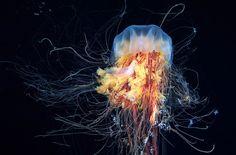 Подводный космос / Путешествия / Моя Планета