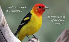 We love this quote!  Wild About Birds Nature Center in Layton, Utah sells everything to do with your #BackyardBirds and also offer tours on the Deseret Ranch, which is home to over 100 species of #birds!  For more information, go to http://wildaboutbirdsnaturecenter.com or call 801-779-BIRD.