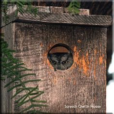 I built an owl house -- it now has a resident!  Totally awesome. 