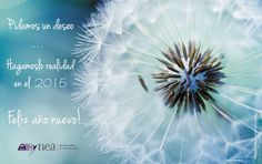 2015 Feliz