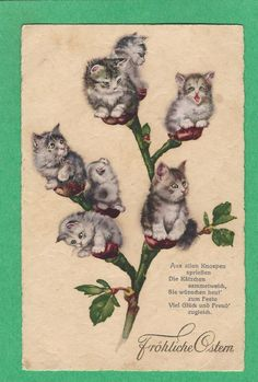 PP FANTASY Cute KITTEN cat PUSSYWILLOW FLOWERS on a BRANCH